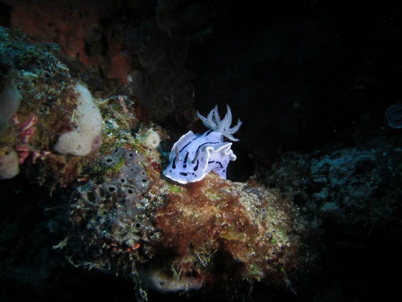Nudibranch 02