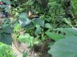 Bohol excursion 12