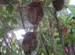 Bohol excursion 13