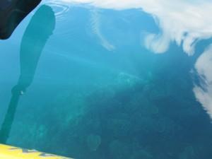 Het water is zo helder dat je het koraal zelfs vanaf de kajak goed kunt bekijken