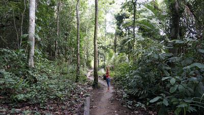 Jungle pad naar de andere kant van het eiland