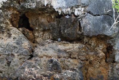 Raja Ampat schedel