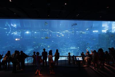 Flink aquarium